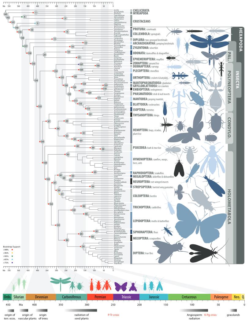 Arbol Filogenetico De Los Insectos Science 2014 Evolucion Biologica Zoología Ephemeroptera