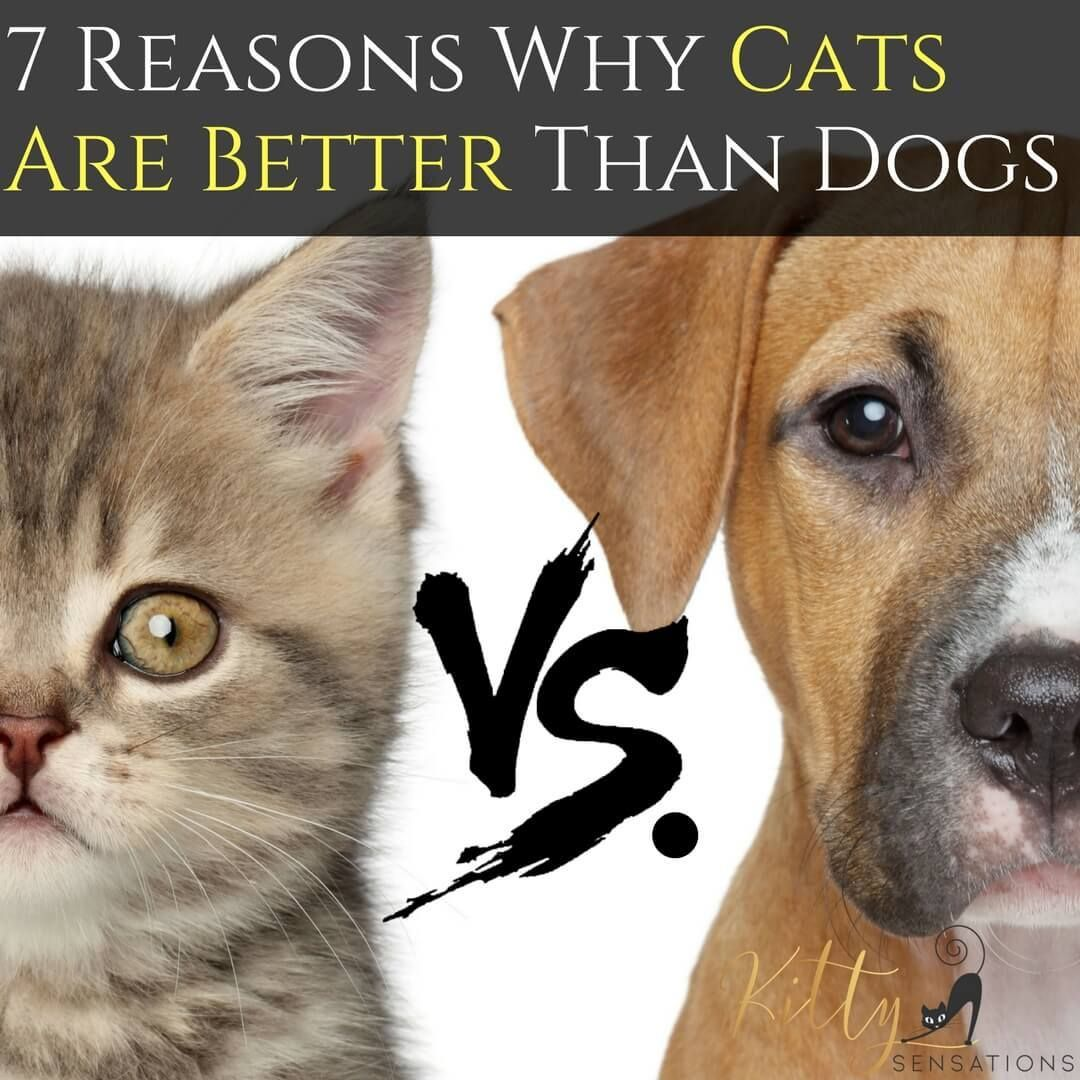 Adorable! 17 Cats With Thumbs (Image Collage) Cat vs dog