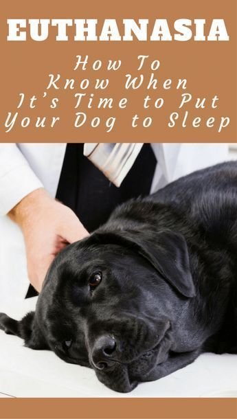Knowing when to put your dog down is the last great act of ...