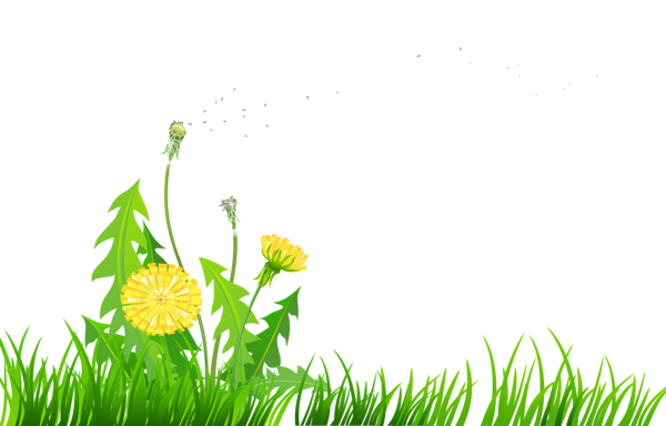 Grass Lawn Benih Nachsaat Seed PNG, Clipart, Artificial Turf, Benih,  Fescues, Garden, Grass Free PNG Download
