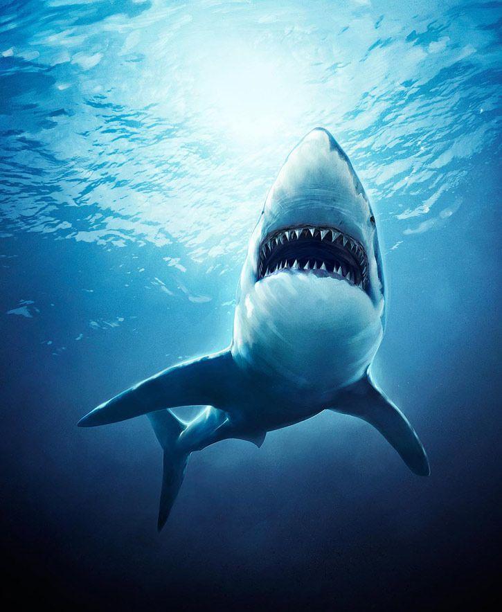 sharks digital art / Ocean Life Animals | Great White Shark ...