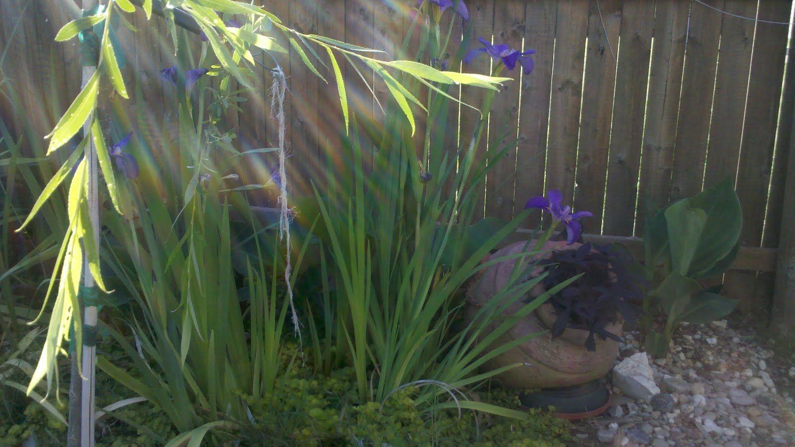 2012 April « Blue Sandpiper