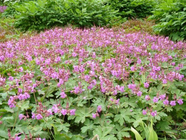 Stauden Und Geholze Zur Hangbepflanzung Garten Pflanzen Plants