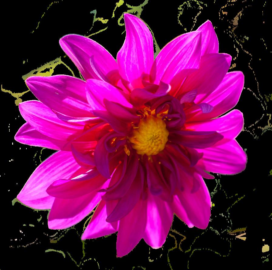 Dark pink flower png by alz stock and art flowers pinterest dark pink flower png by alz stock and art mightylinksfo
