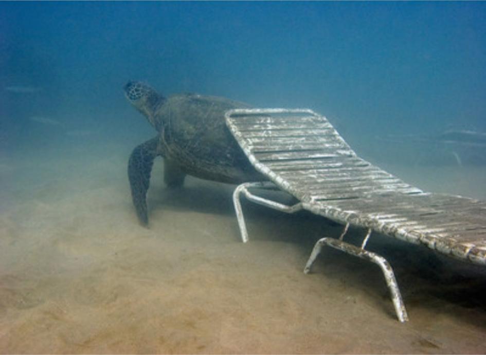 Pin By Kickypie Com On Chairs Underwater Underwater Underwater Images Chair