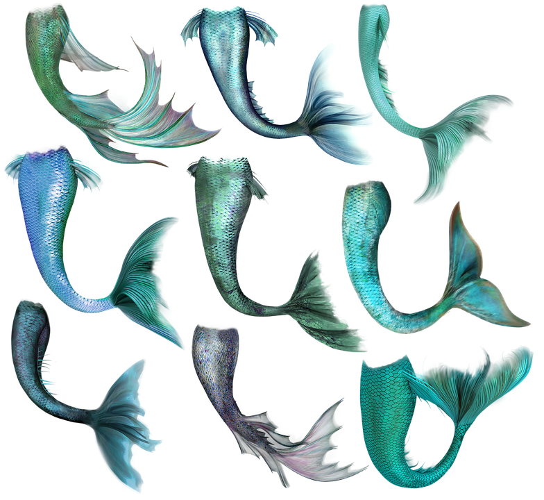 Free Image On Pixabay Mermaid Fish Tail Merrow Mermaid Artwork Mermaid Images Mermaid Tail Drawing
