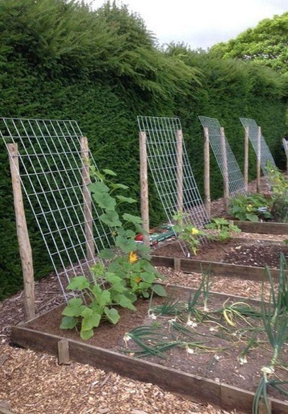 Photo of 18 Fabulous Backyard Vegetable Garden Design Ideas for Beginners