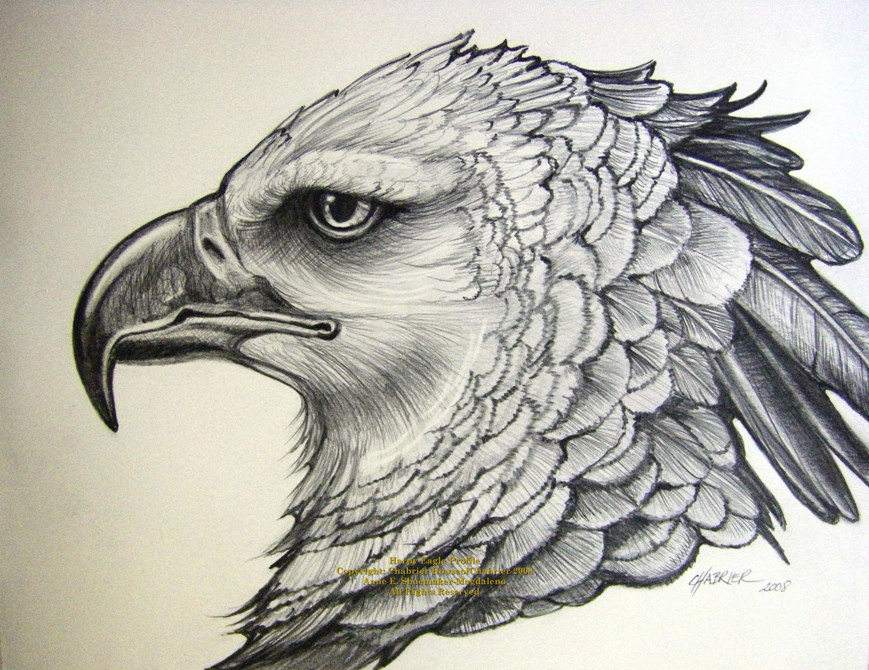 выполняя картинки эскизы тату орла самоизоляции распространяется