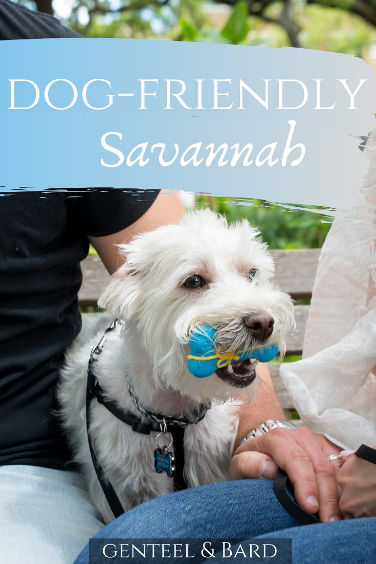 Dog Friendly Savannah Genteel Bard Dog Friends Dogs Savannah Chat