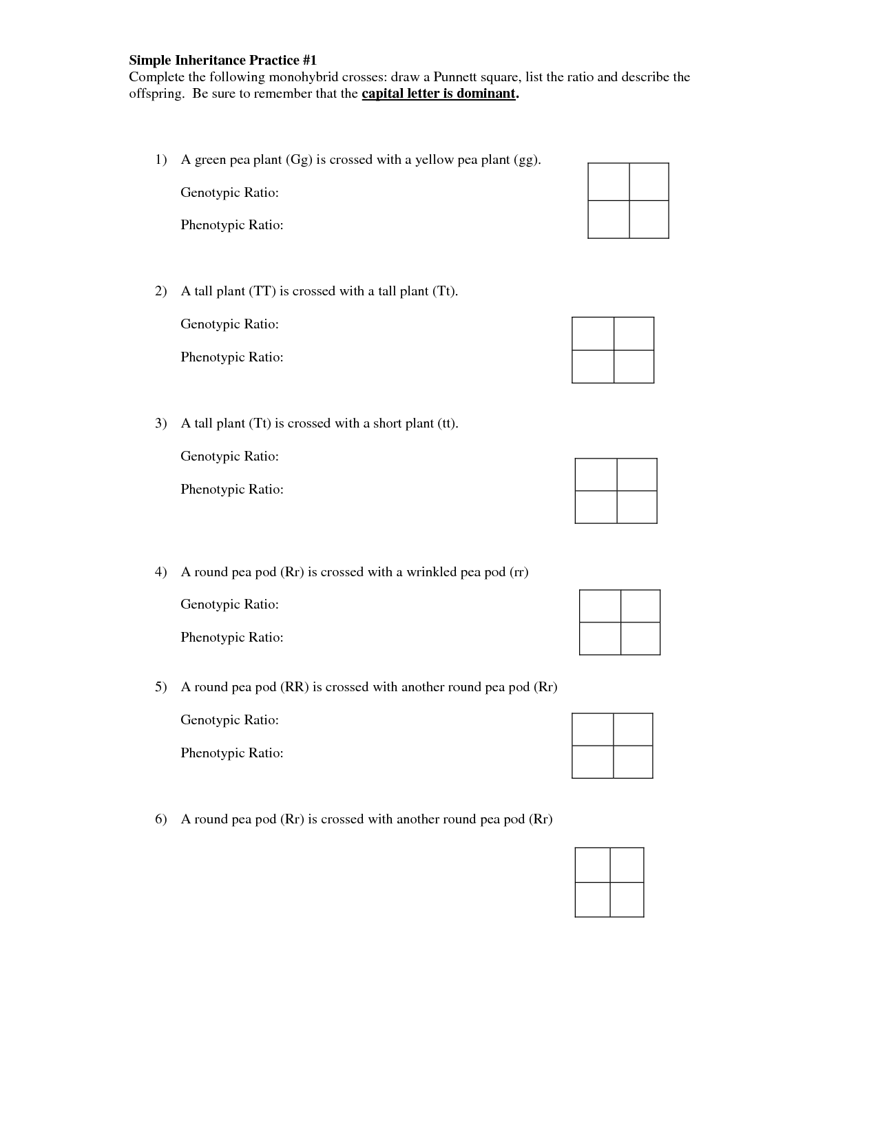 Pea Plant Punnett Square Worksheet In
