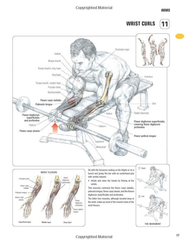 Strength Training Anatomy-3rd Edition: | Health, Fitness,Workout ...