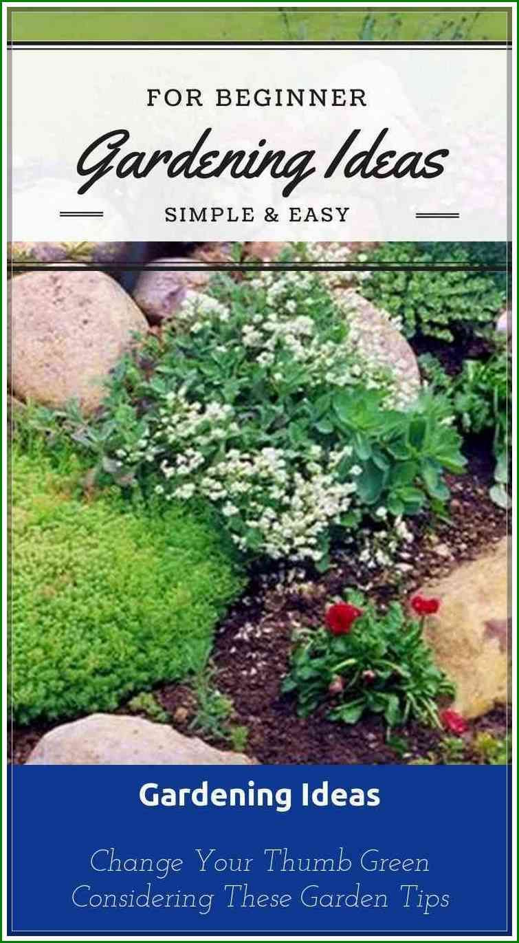 Things That You Need To Know Gardening For Beginners With Images