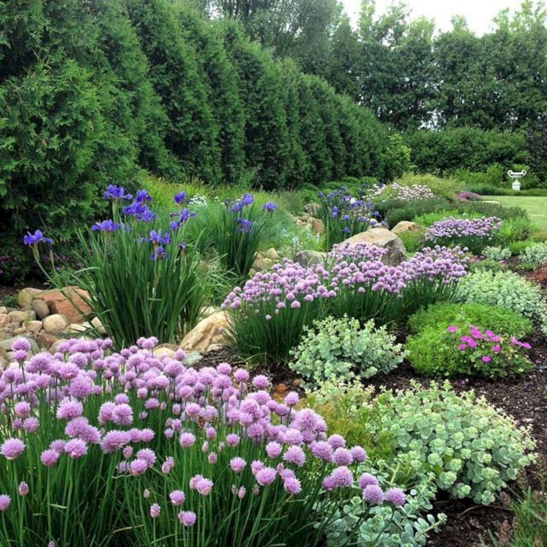 My Favorite Plant Combinations 34 Plants Beautiful Gardens Iris Garden