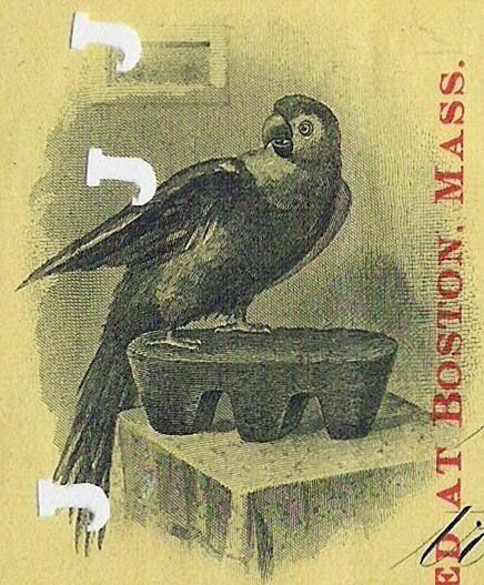 Parrot Silver and Copper Company vignette share certificate 1904 - company share certificates