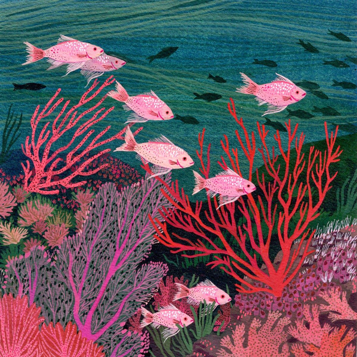 coral reef - becca stadtlander illustration | art ...