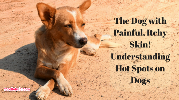 442f6419941e527d564f7c0114ddfea7 - How Can I Get My Dog To Stop Scratching Himself