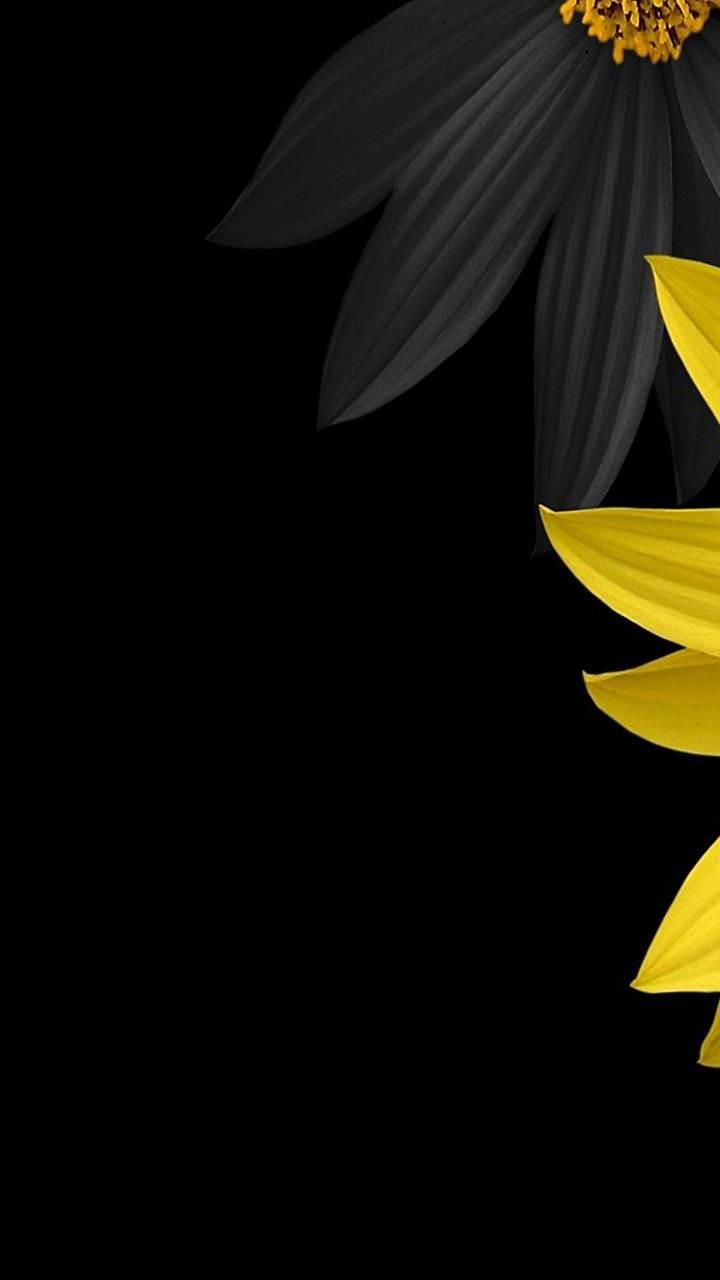 Light Yellow Galaxy S3 Wallpapers Yellow Flower Wallpaper Black Background Wallpaper Flower Wallpaper