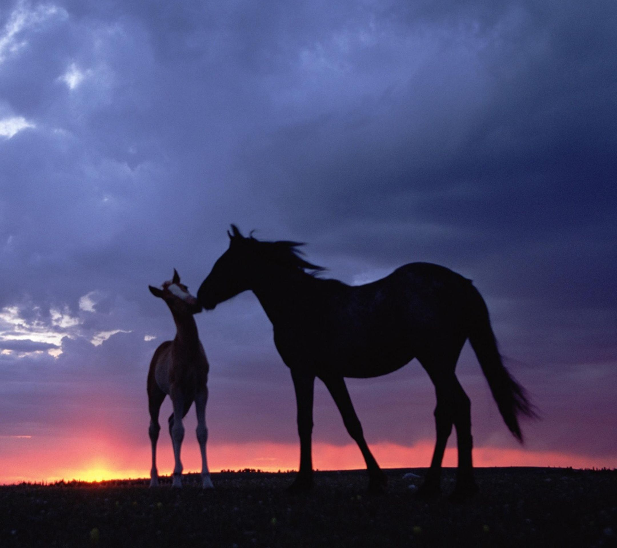The Galaxy S4 Wallpaper I just pinned! Horses, Beautiful