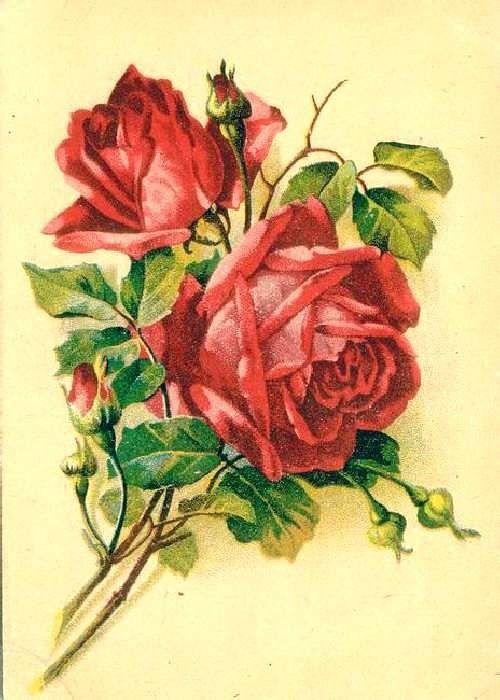 цепи, советские картинки с розами эйчар лена
