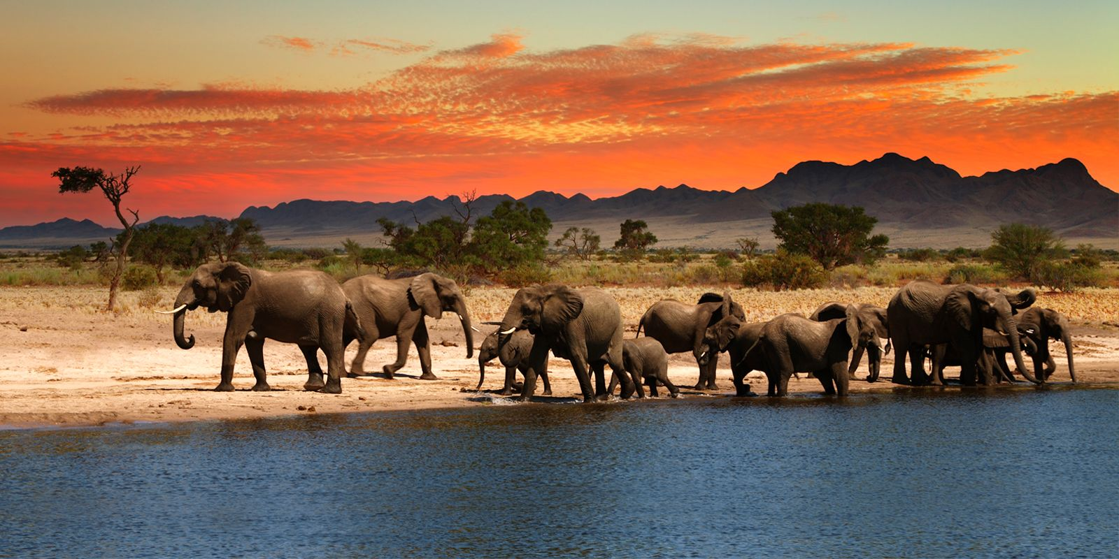 If you opt African safari packages you have a chance to