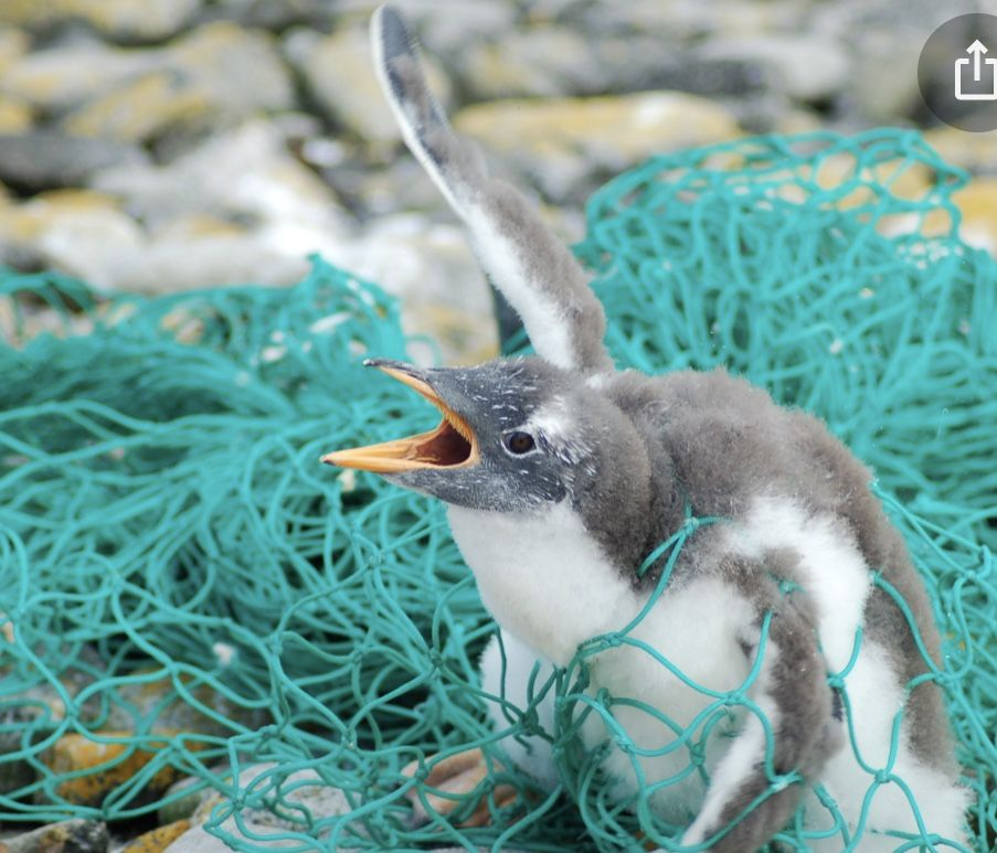 Pin by Willow Le on Save the oceans!Save the animals! in