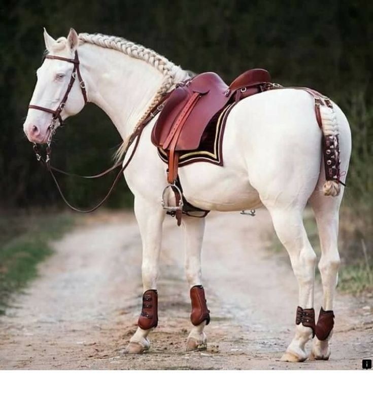 Discover more about horseback riding lessons near me