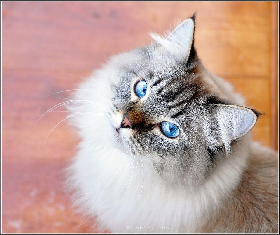 Magical Meow, igorcentr Feral cats, Cool cats, Domestic cat