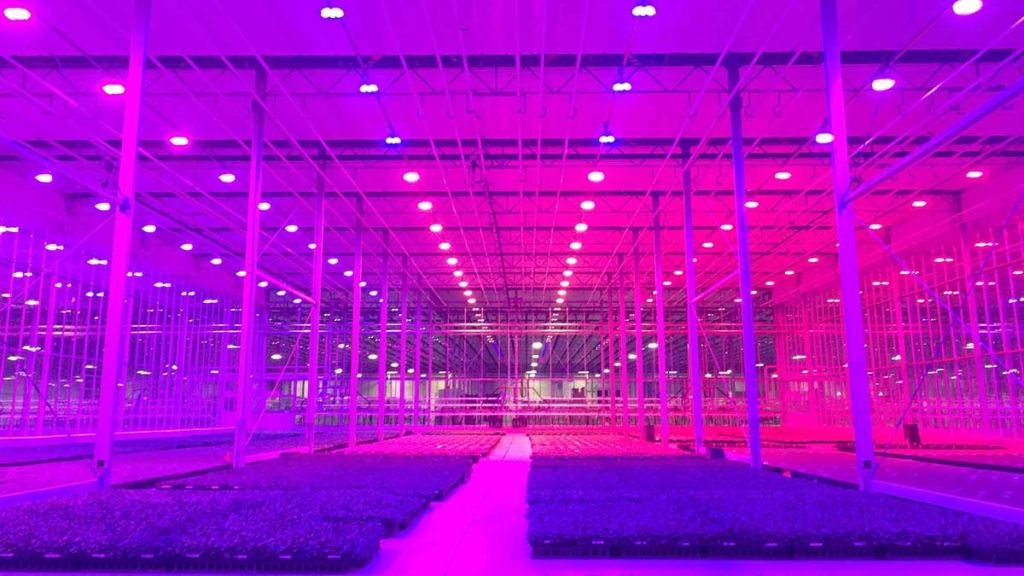 Greenhouse Propagation Under Lumigrow Led Grow Lights