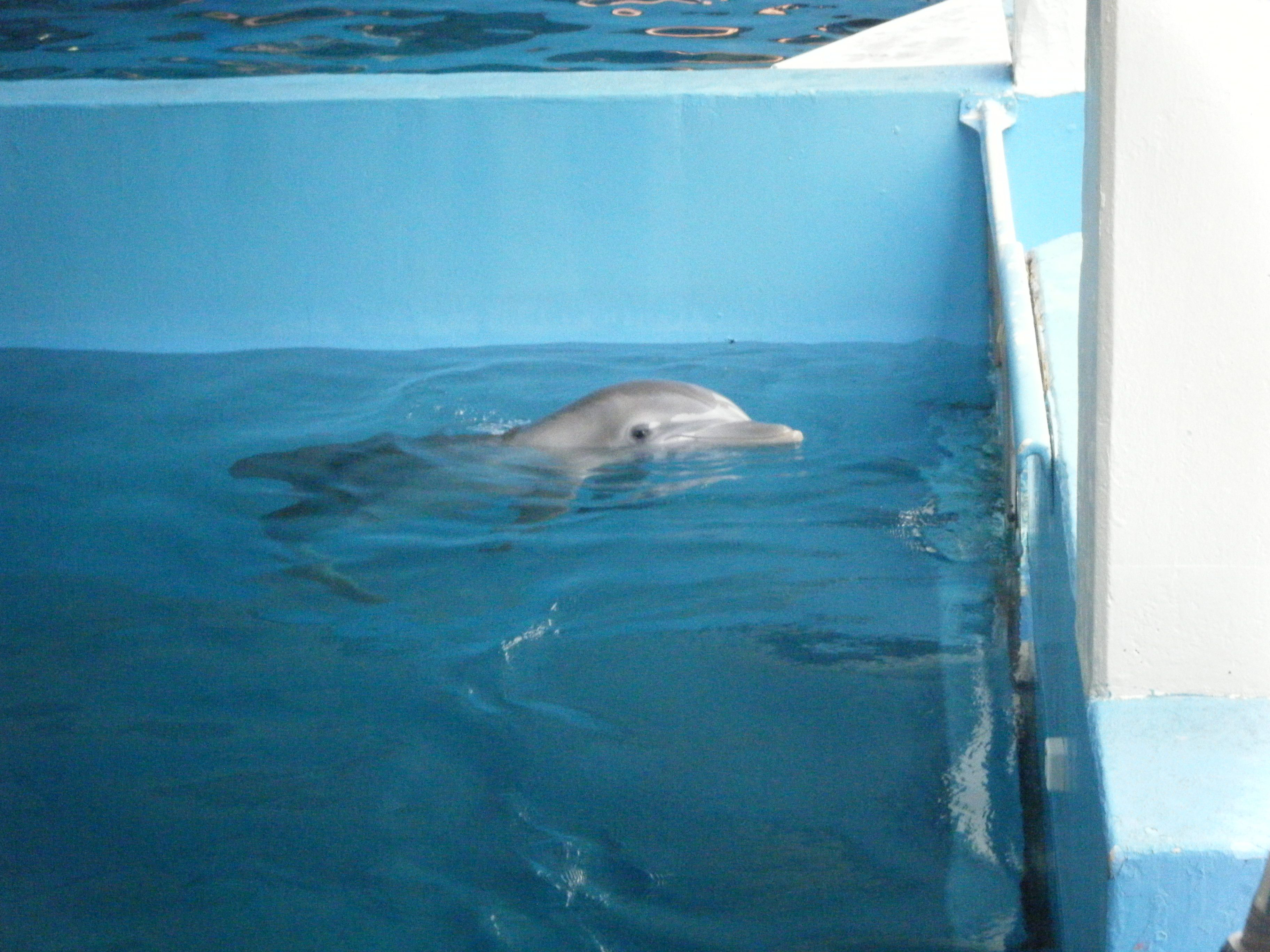 Winter the Dolphin Dolphin tale, Clearwater florida