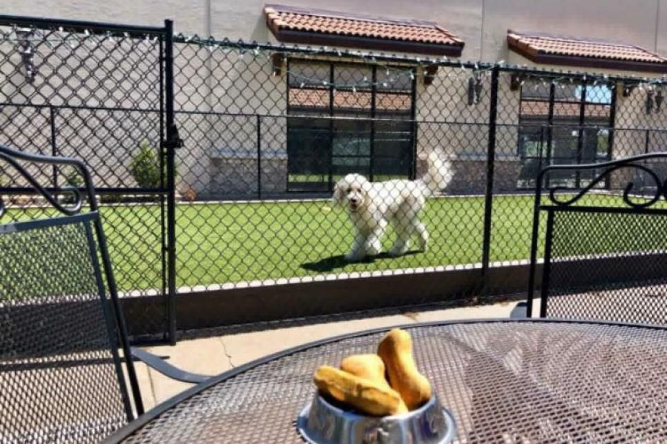 Fetch Bistro Witchita Kansas Dog Friendly All Day Breakfast 3 Dog Friends Dogs Restaurant