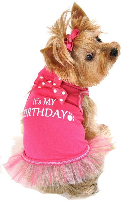 Image 1 Pet Fashion Girl And Dog Pink Scarves Shirt Sofia