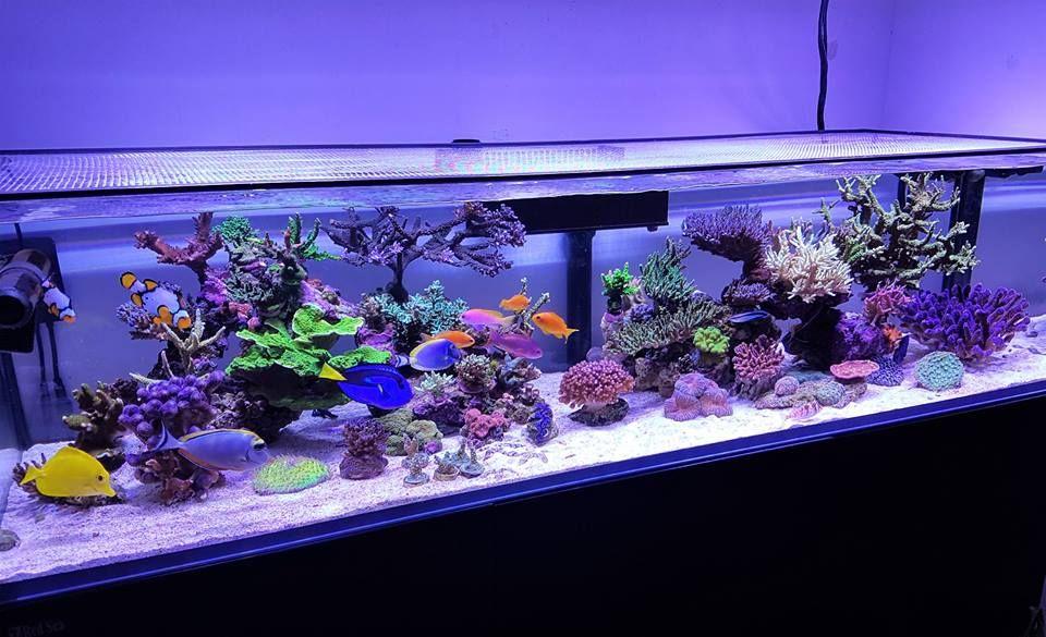 Pin von randy jondal auf aquariums for the home for Salzwasser aquarium