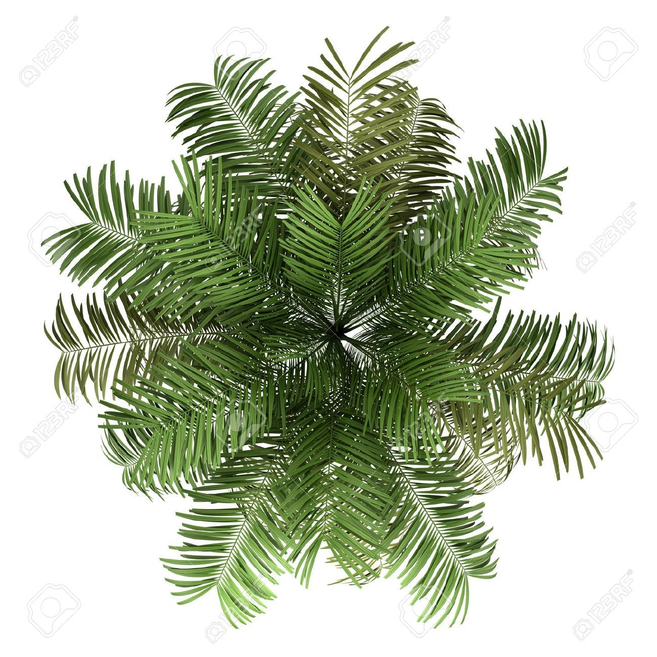 Top view plants 02 2d plant entourage for architecture - Washingtonia Png Buscar Con Google Architectural Treesphotoshop Brushespalm Treestree
