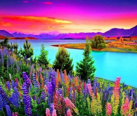 Beautiful Colors New Beautiful Colors Of Nature  Flowers Wallpaper Id 1712288 Design Ideas