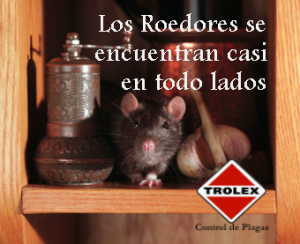 Los roedores se reproducen de manera acelerada, como un mecanismo de defensa ante sus númeroso depredadores naturales, la mayoria de las especies viven entre 3 y 4 años.