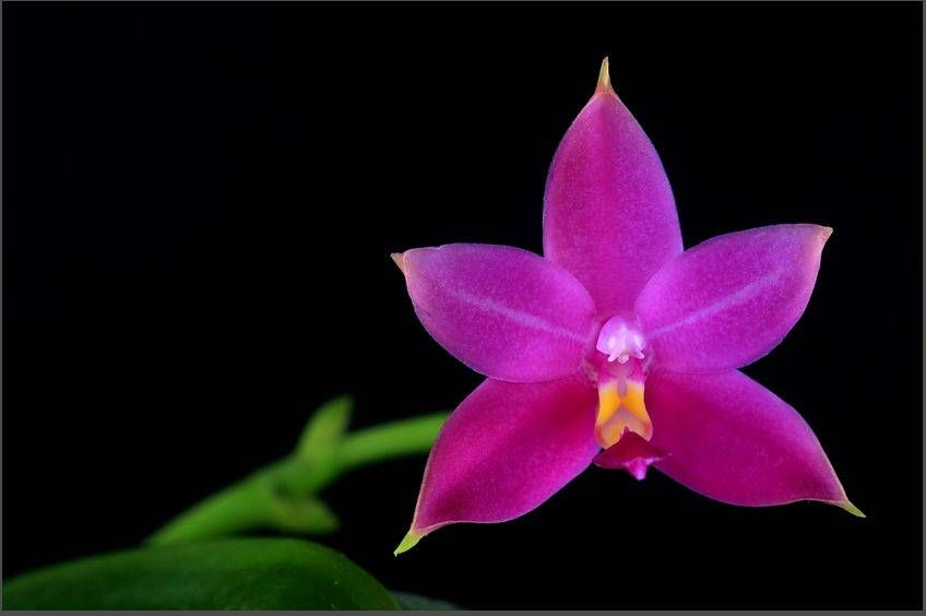 Aeonium | Planting flowers, Plants, Succulents
