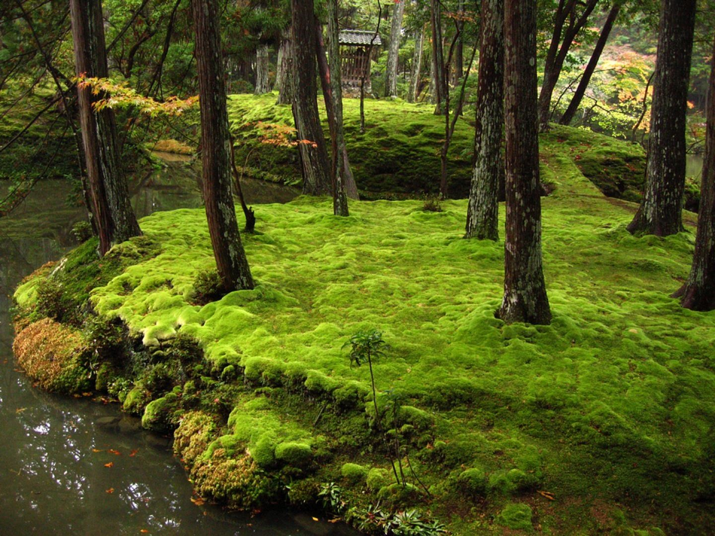 Ancient japanese gardens - Ancient Japanese Gardens Its Moss Garden Is Commonly Referred To As