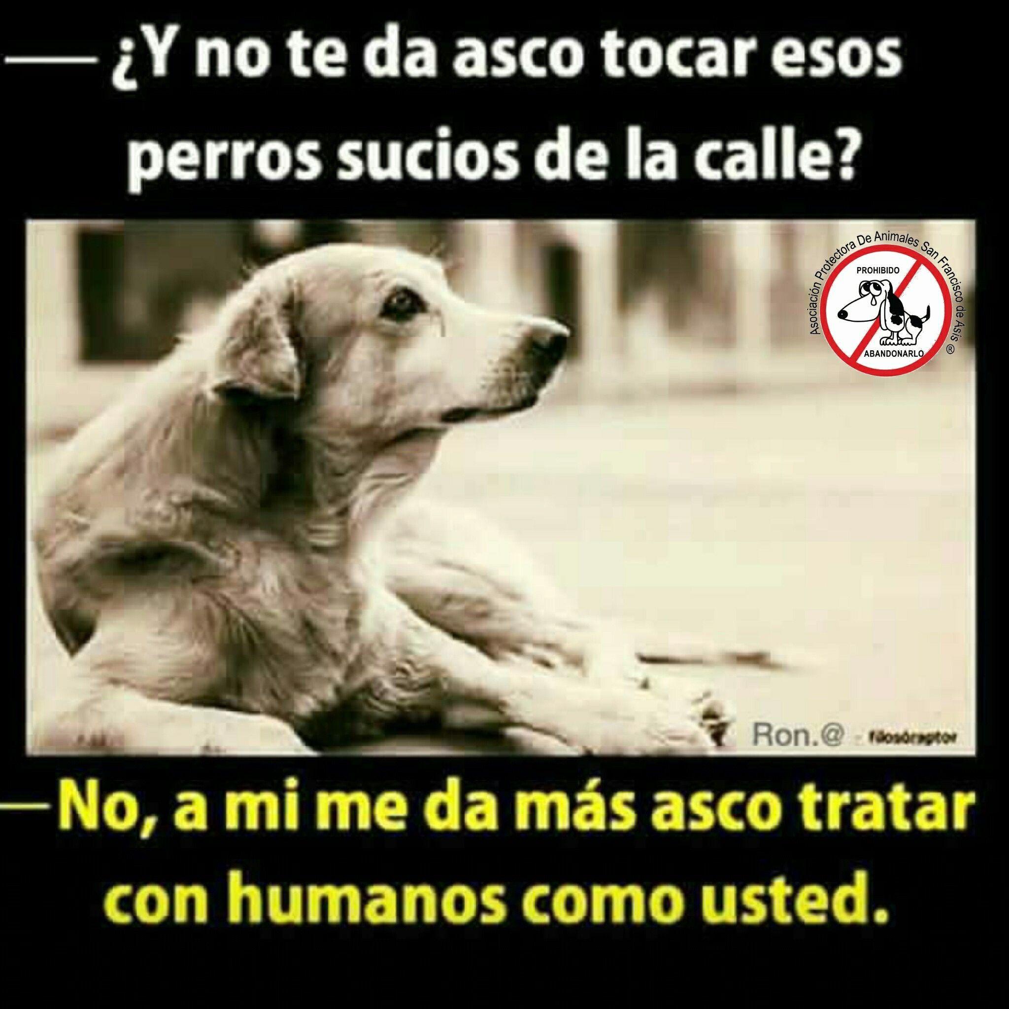 Lo Bello De Esto Es Que Muestra Que Algunas Personas Si Tienen Corazón Perros Frases Perros Animales Frases