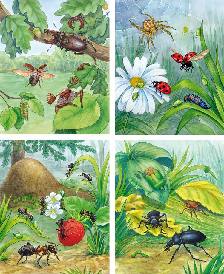 Картинки насекомых весной для детей