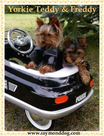 Hey mom,I didnt know Teddy had a friend named Freddy. I think they want to go cruzing!!!!!lol