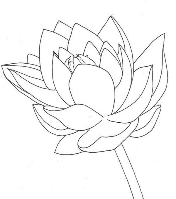 Lotus flower drawing of lotus flower coloring page tattoo ideas lotus flower drawing of lotus flower coloring page mightylinksfo
