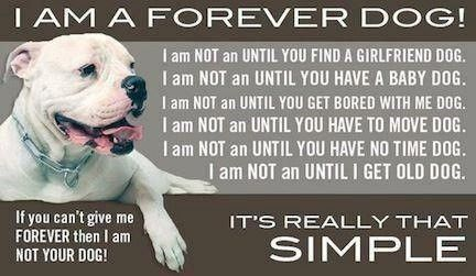 This should be plastered everywhere in adoption centers