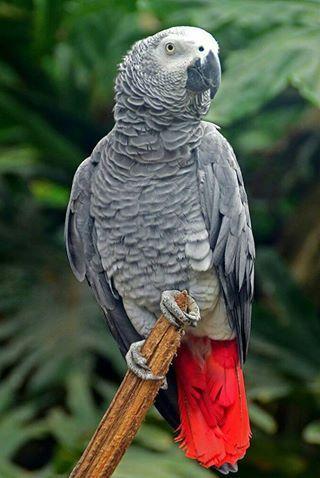 Parrot, Parrot image, Pet birds