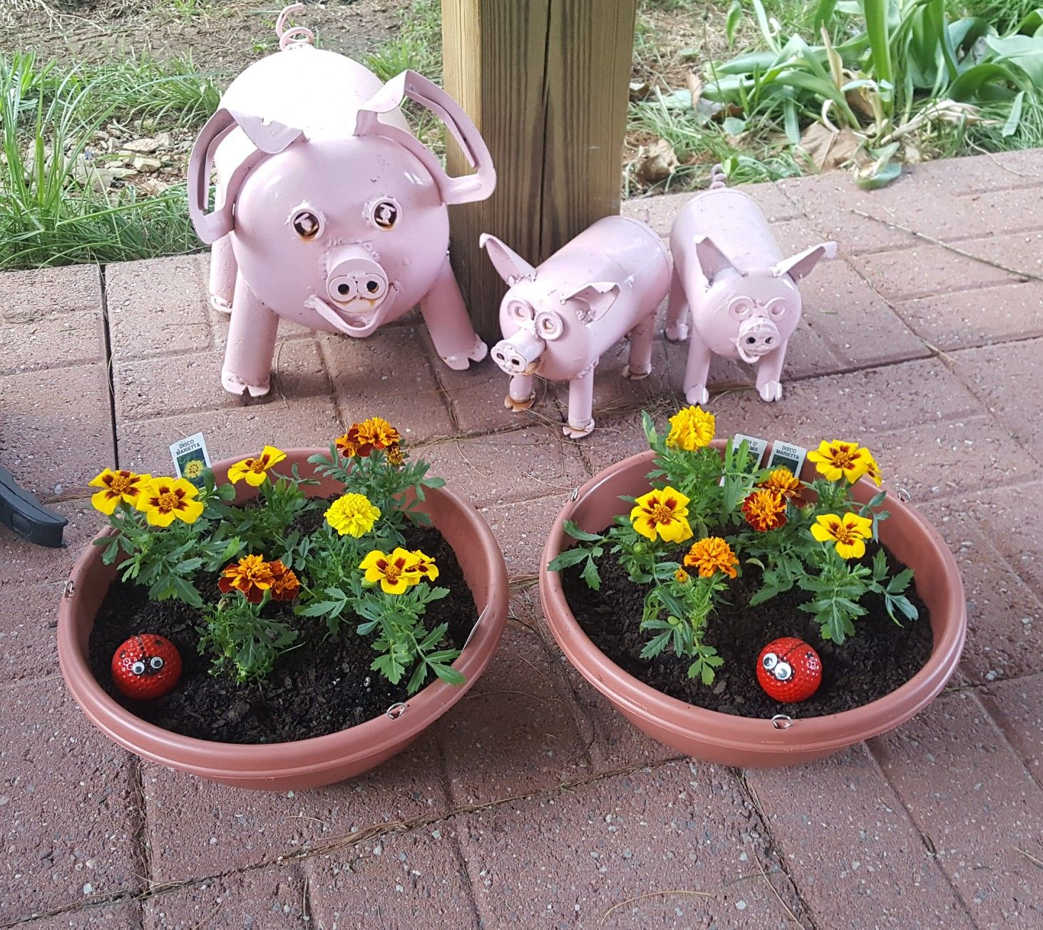 Flowers and bacon! Plants, Garden, Planter pots
