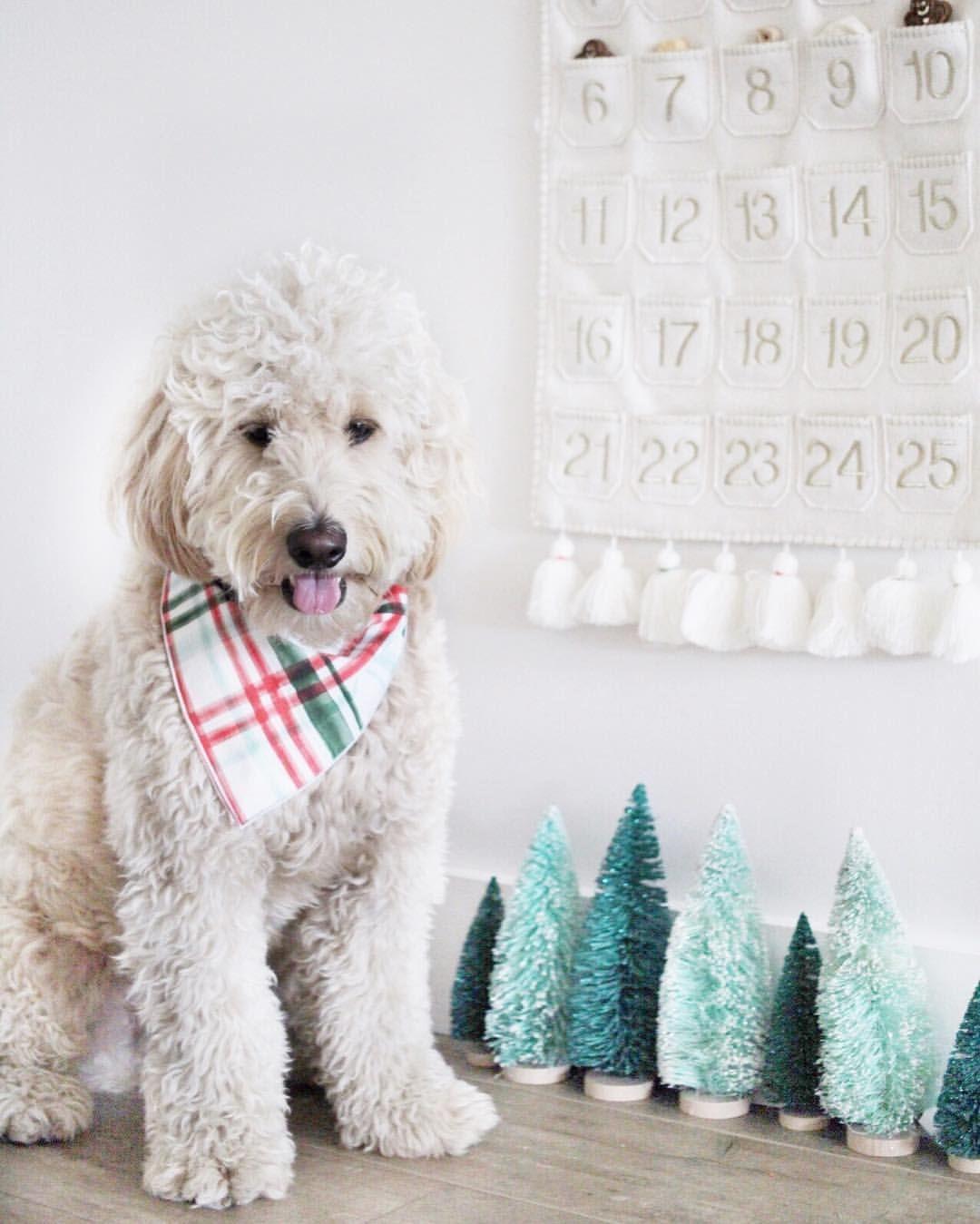 Puppy Christmas Countdown Cute Dog