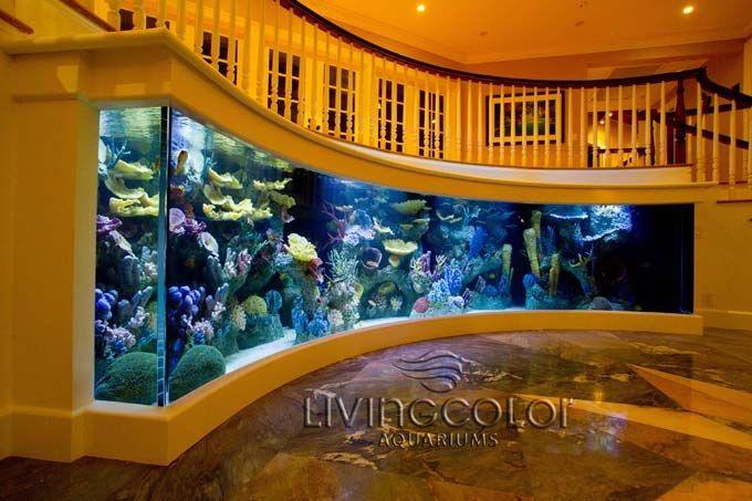 curve appeal a 2000 gallon crescent aquarium aquarium