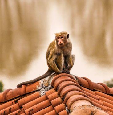 Путеводитель для планирования самостоятельного путешествия по острову Шри Ланка. Высокогорье Шри Ланки, побережье Шри Ланки, исторические места и тп.