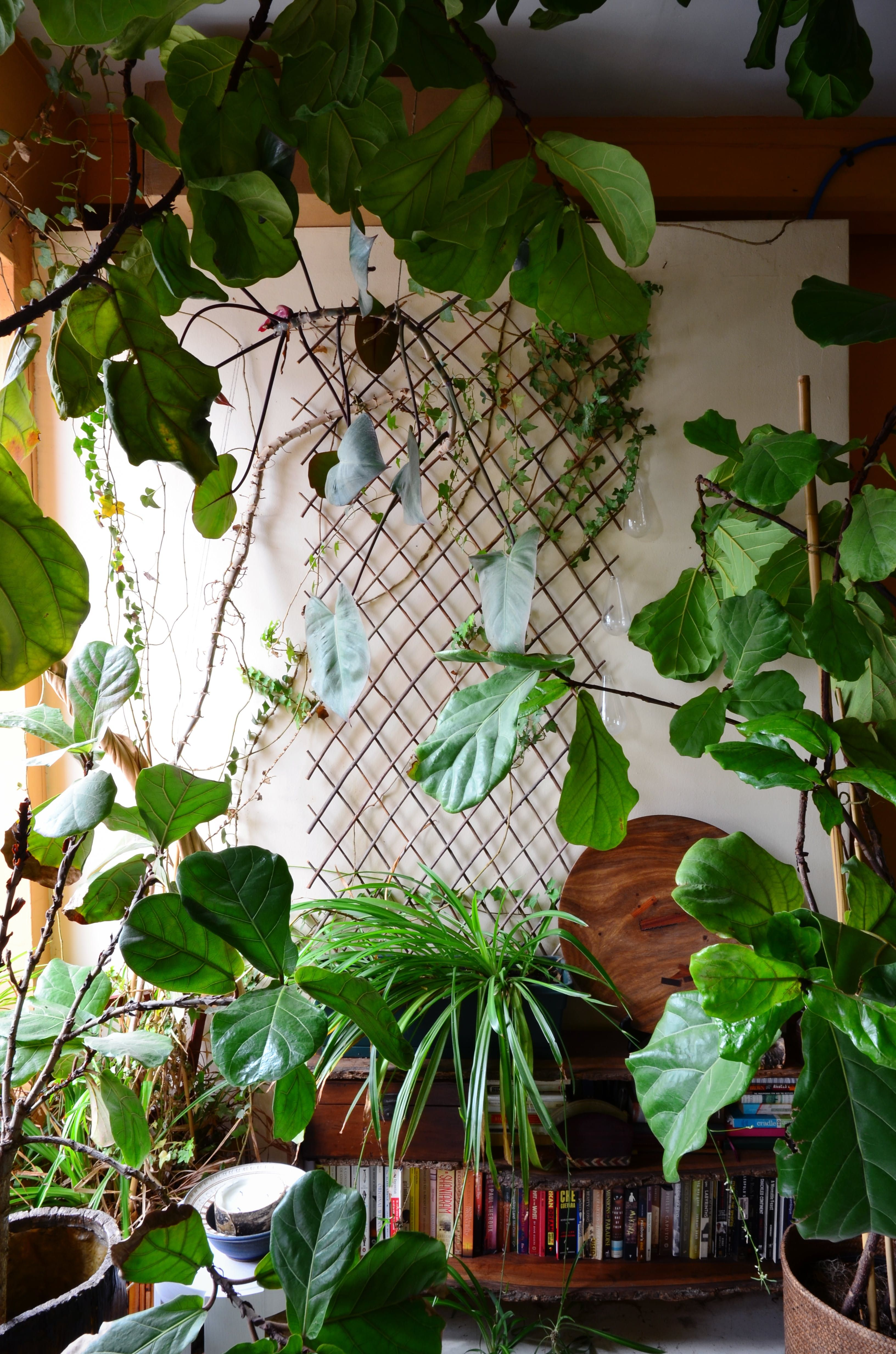 An Indoor Jungle Grows In A Brooklyn Apartment Indoor Jungle Brooklyn Apartment Plant Decor