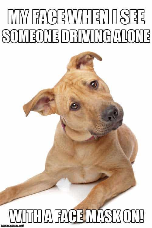 Dog Meme about wearing a mask and driving.  #barkinglaughs #dogs #funny #humor #memes #dogmemes #socialdistancing