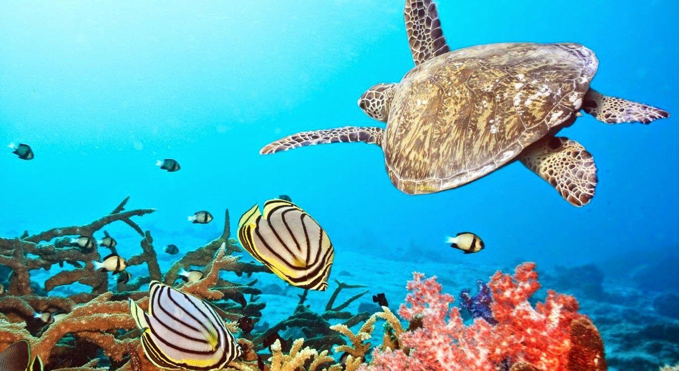 Wild Life : Beautiful Animals Scenery
